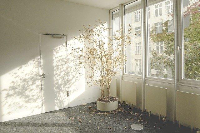dying houseplants